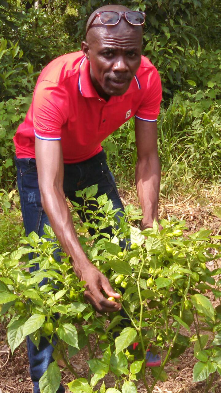 OPODNE Cooperative Harvests First Pepper Crop In Mont Organise